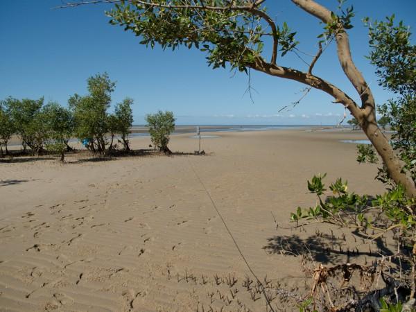 La République des enfants - USM 69 et mangrove